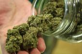 New York Mom Accidentally Receives 7 Pounds Of Marijuana Instead Of Childrens Toys